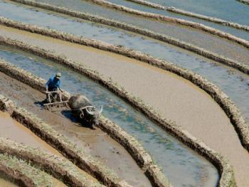 哈尼梯田的稻作农耕07