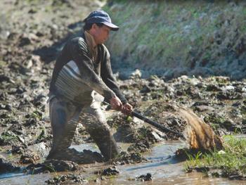 哈尼梯田的稻作农耕08