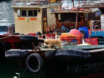 蛇口渔港11