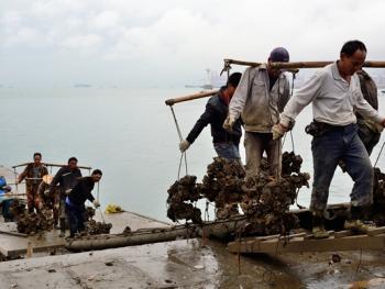 蛇口渔港04