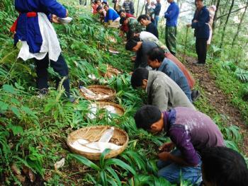 尔苏藏族还山鸡节