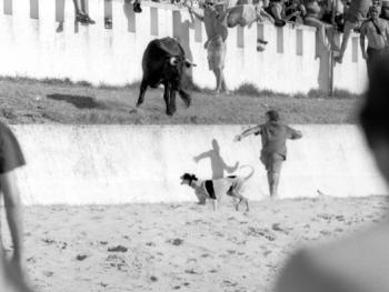 特茹河口的沙滩斗牛10