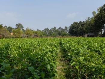 柬埔寨丝绸制作