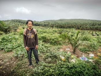马来西亚收棕榈果04