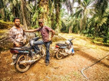 马来西亚收棕榈果09