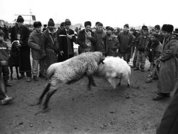 布哈拉牲畜市场10