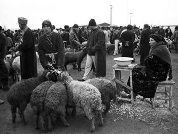 布哈拉牲畜市场