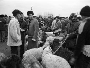 布哈拉牲畜市场02