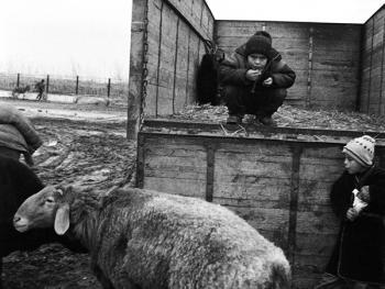 布哈拉牲畜市场04
