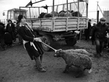 布哈拉牲畜市场05