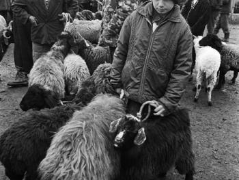 布哈拉牲畜市场06