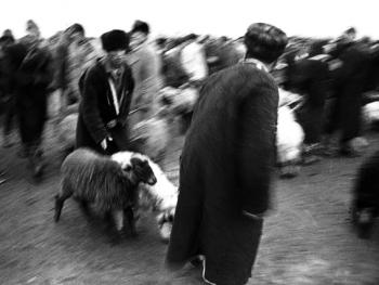 布哈拉牲畜市场08