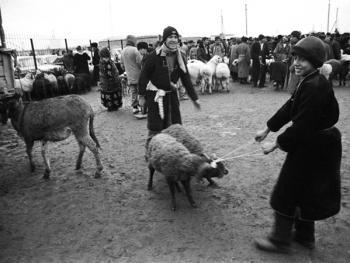 布哈拉牲畜市场09