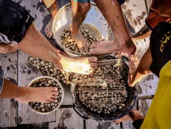 印尼挖蛤蜊13