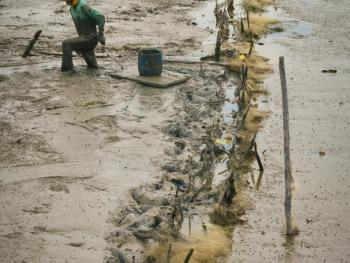 印尼挖蛤蜊03