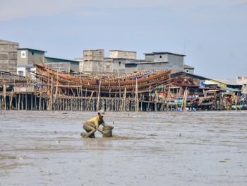 印尼挖蛤蜊08