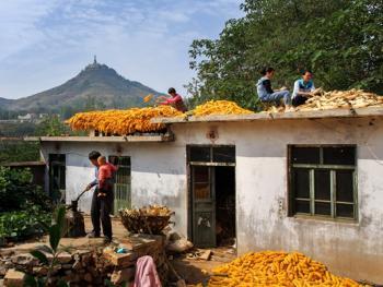 沂蒙山人的农作