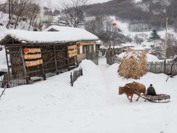 关东山区牛爬犁11
