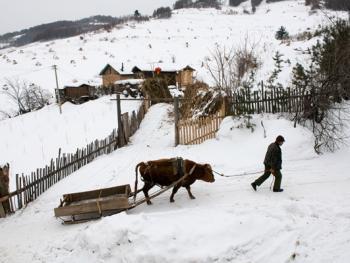 关东山区牛爬犁12