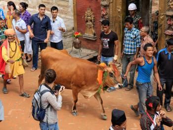 尼泊尔神牛节02