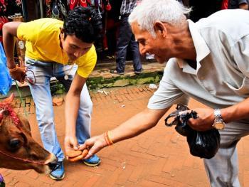尼泊尔神牛节04