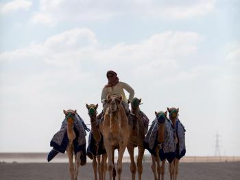 马克图姆骆驼赛2