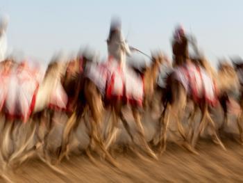马克图姆骆驼赛4