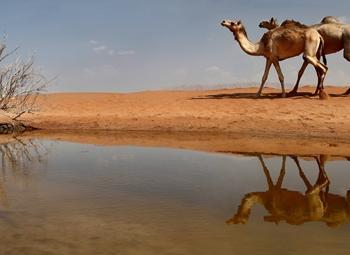 马克图姆骆驼赛5