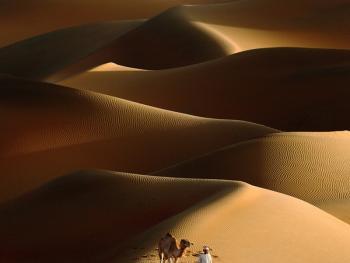 马克图姆骆驼赛8