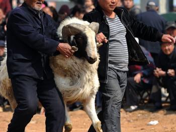 水浒故地赛斗羊09