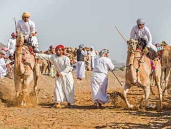 阿曼赛骆驼2