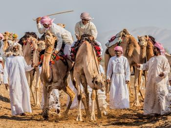 阿曼赛骆驼3