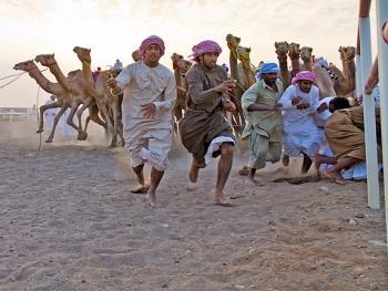 阿曼赛骆驼6