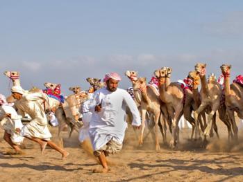 阿曼赛骆驼9