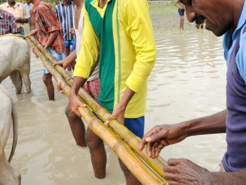 西孟加拉驾牛比赛03