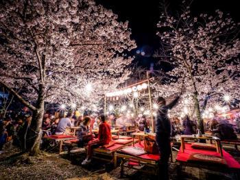 日本樱花节12