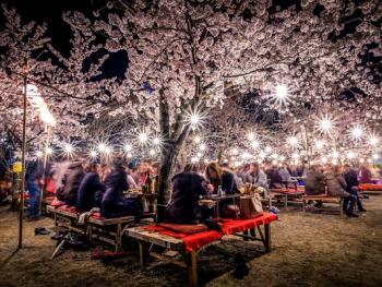 日本樱花节14