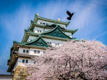 日本樱花节01