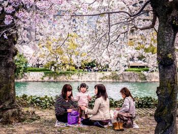 日本樱花节04