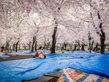 日本樱花节06