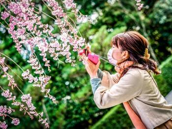 日本樱花节09